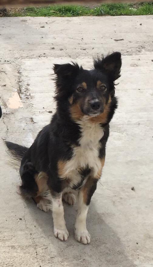 Daisy, una cagnolina abbandonata