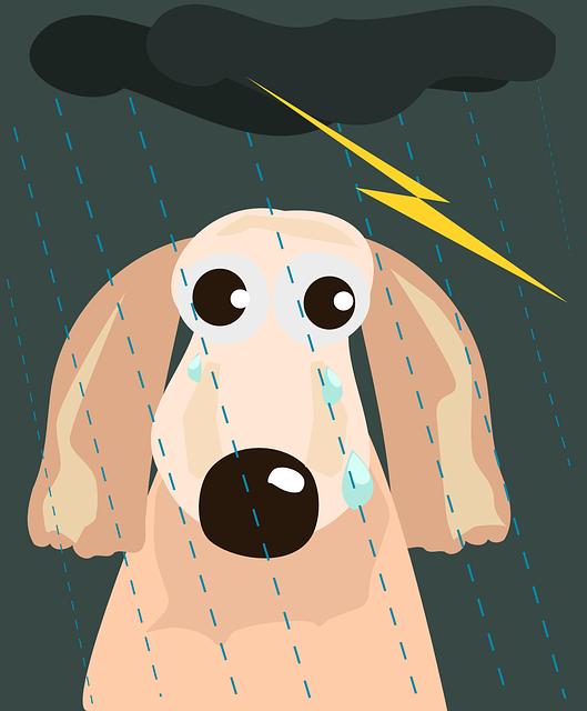 Perché-i-cani-si-rifiutano-di-uscire-con-la-pioggia