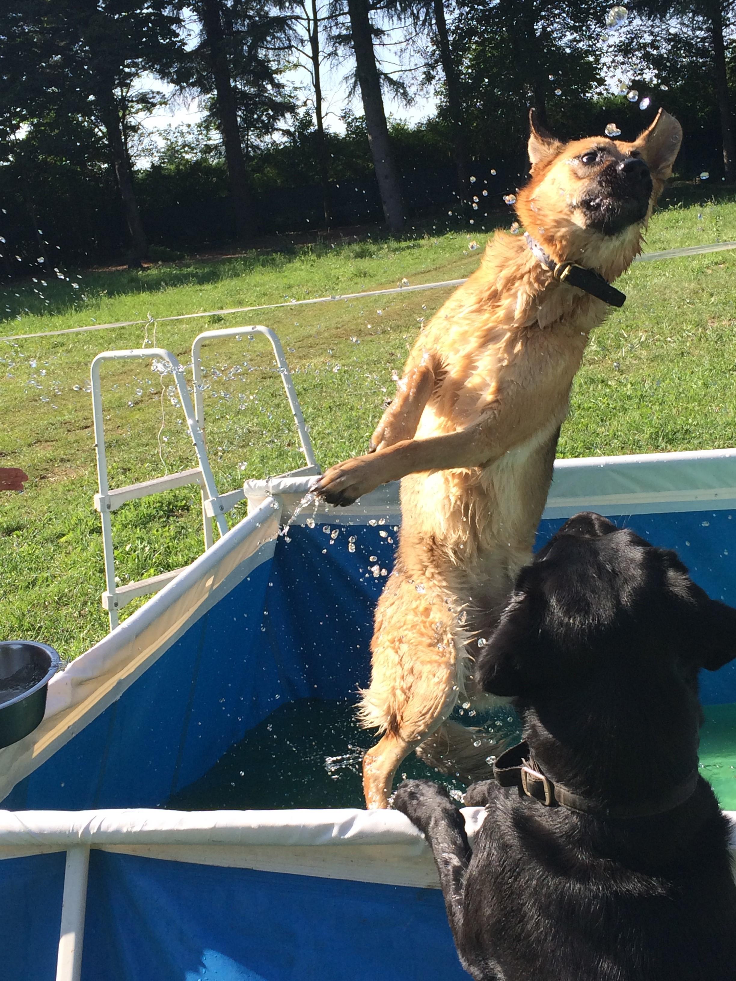 lasciare il cane a una persona di fiducia