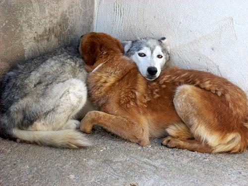 Arriva il freddo anche per i nostri amici cani